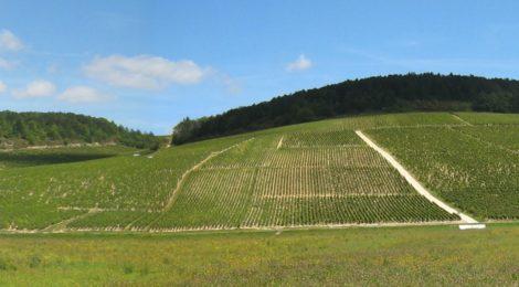#1分钟产区游#出产顶级勃艮第葡萄酒的村庄:夏布利篇