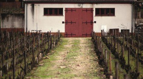 佳酿天成: 亨瑞·贾耶Henri Jayer的酿酒理念